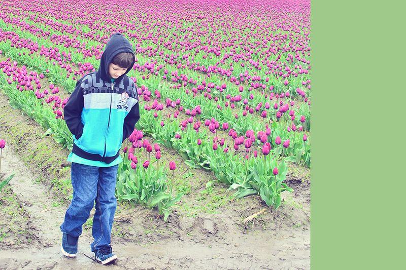 Tulips10