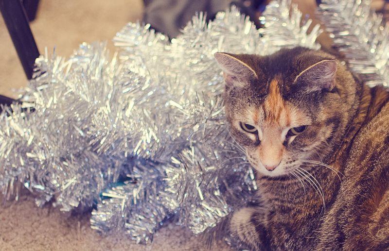 !Jingle
